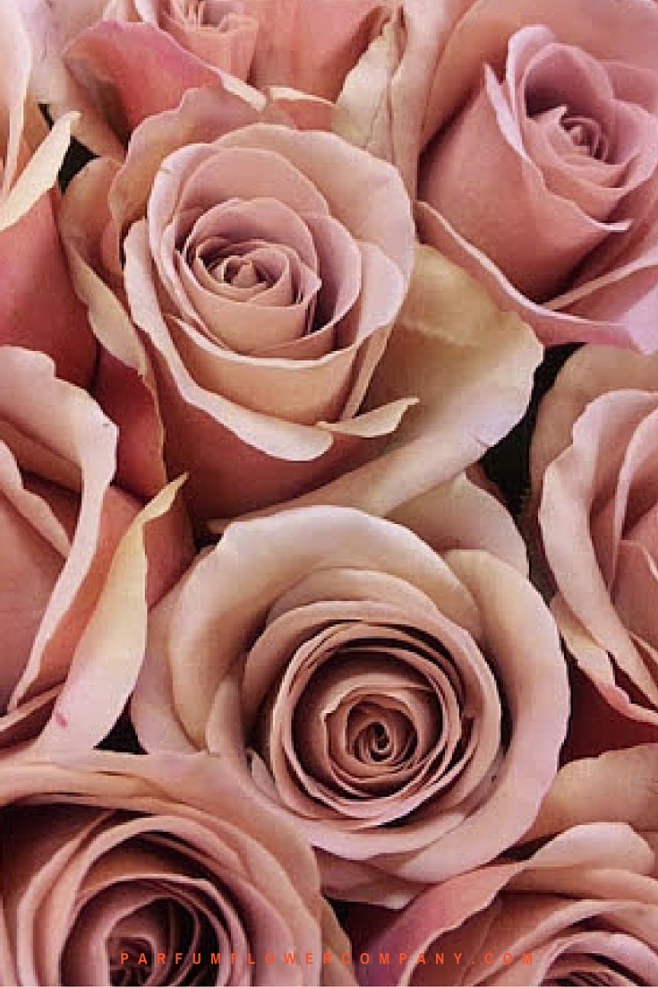 Scented Cafe Latte brown roses 001