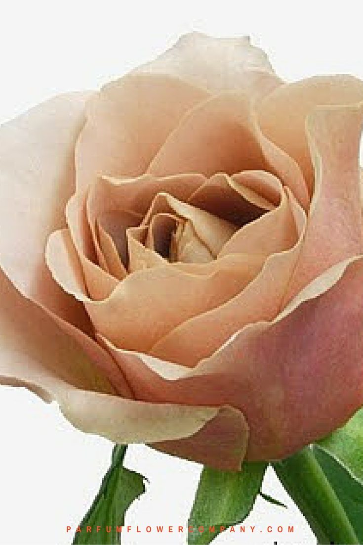 Scented Cafe Latte brown roses 002