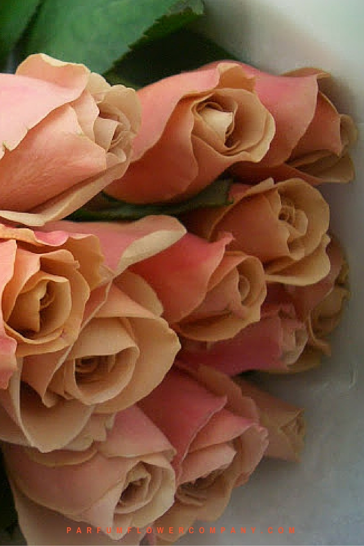 Scented Cafe Latte brown roses 003