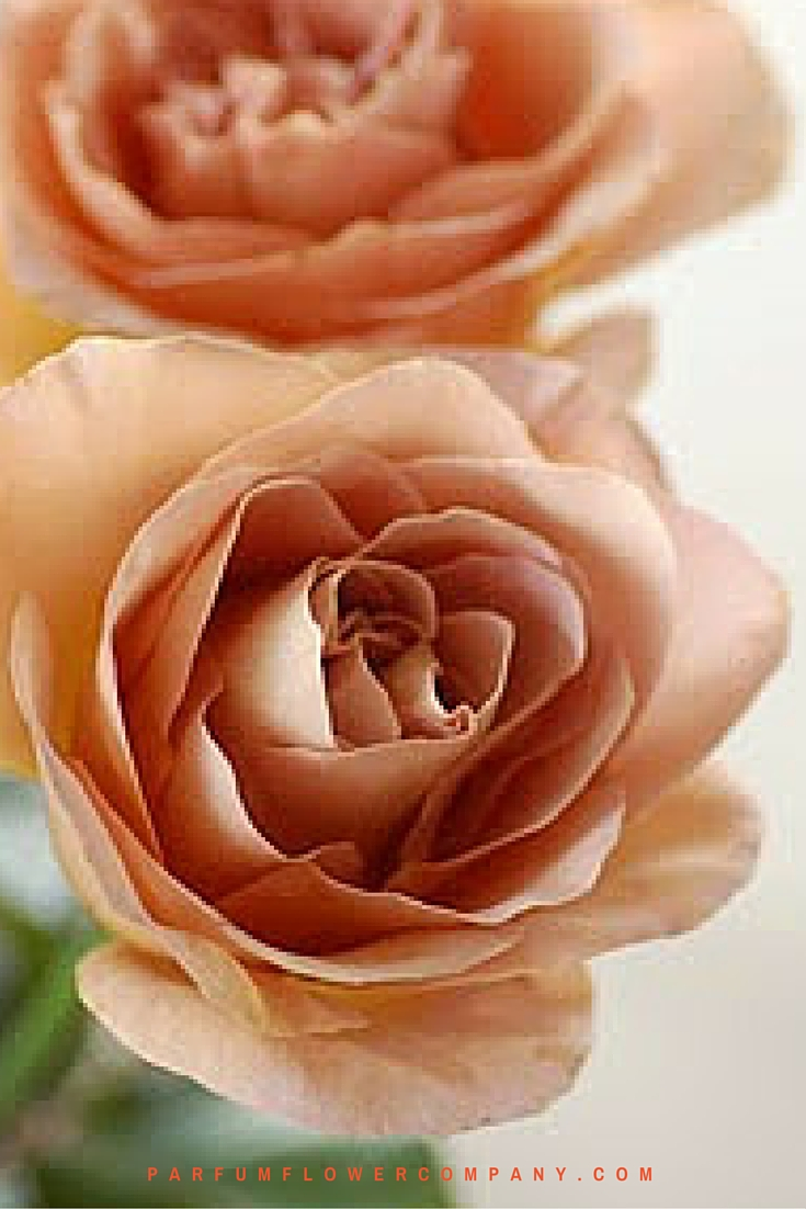Scented Cafe Latte brown roses 004