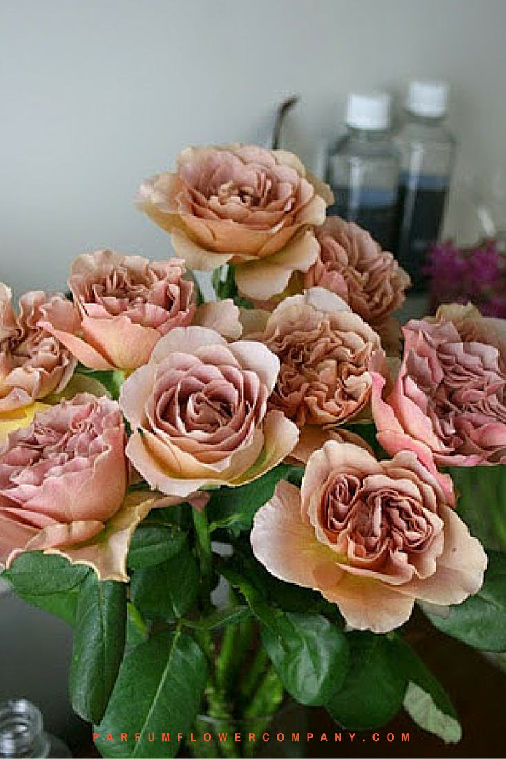 Scented Cafe Latte brown roses 006