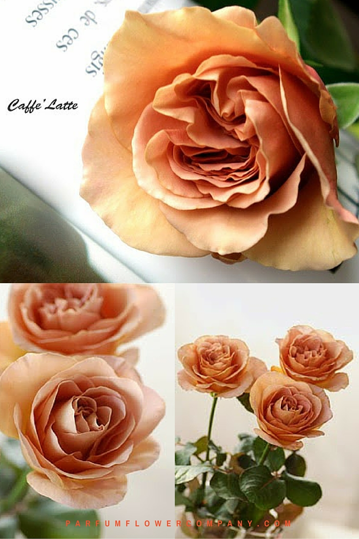 Scented Cafe Latte roses 008
