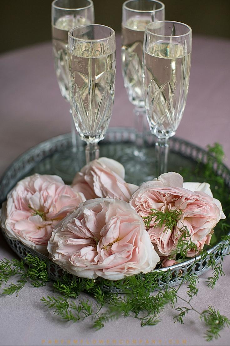 David Austin Wedding rose Charity 011