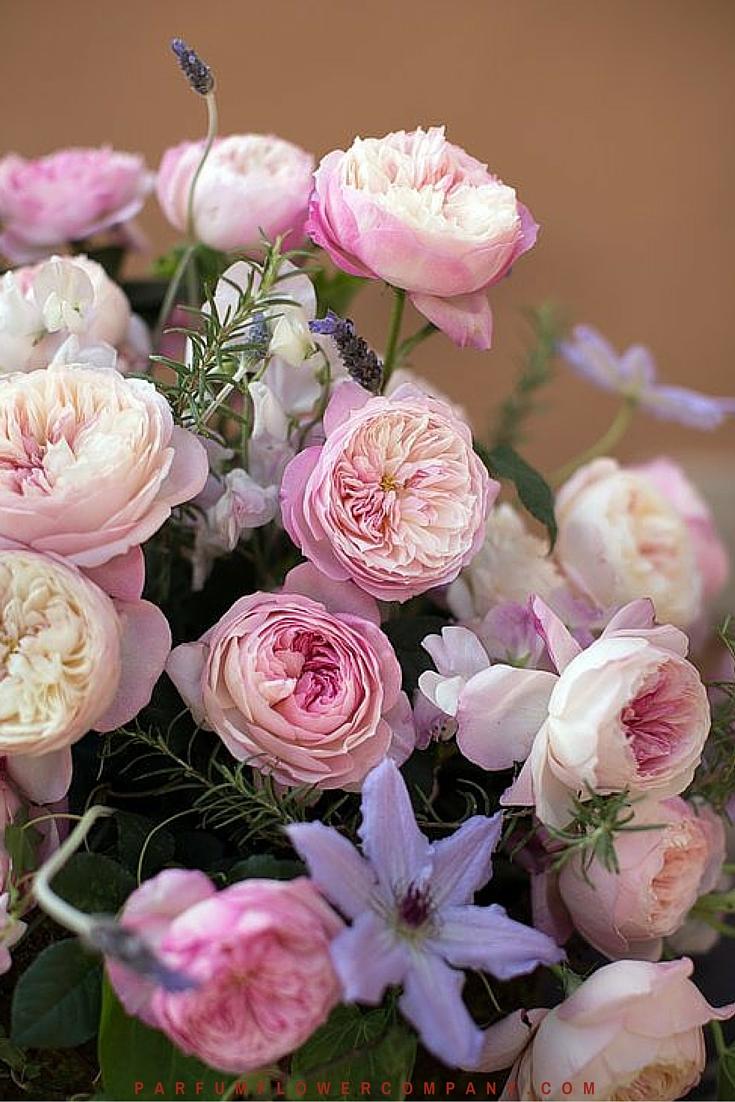 David Austin Wedding Rose Constance