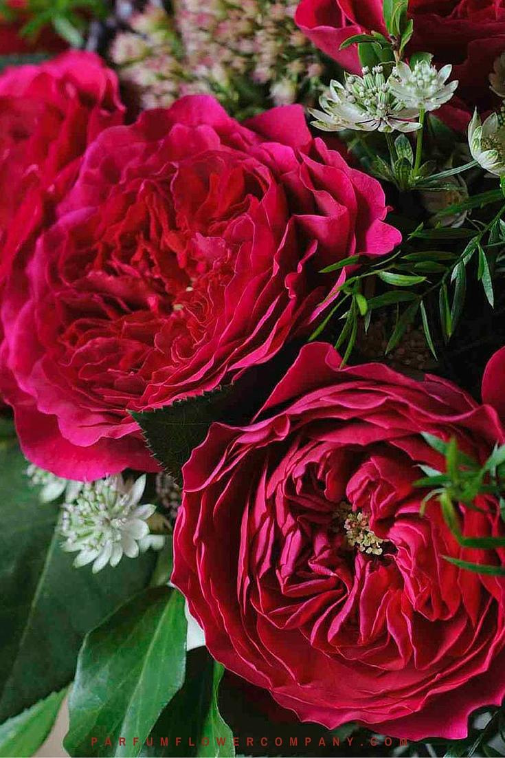 David Austin Wedding Rose Darcey