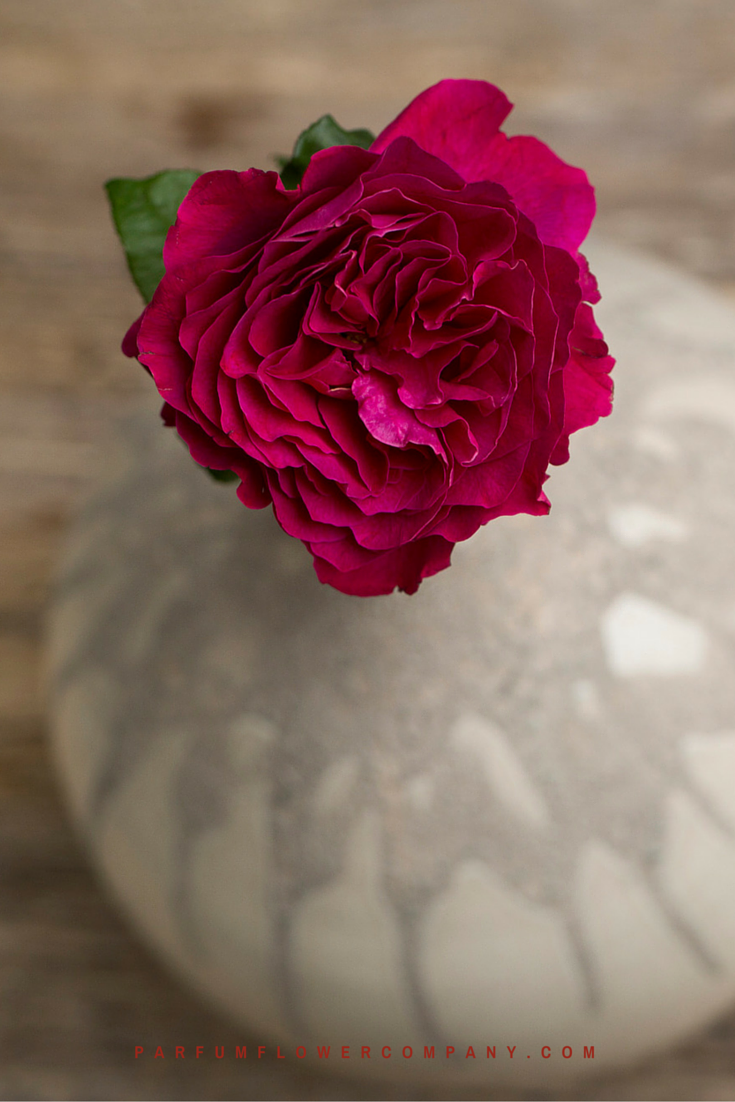 David Austin Wedding Rose Darcey Parfum Flower Company