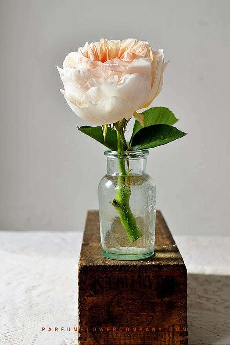 Peach David Austin wedding Rose Juliet 006