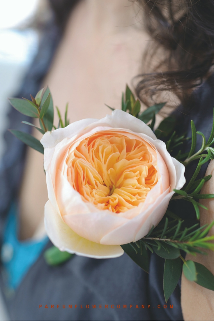 Peach David Austin wedding Rose Juliet 007