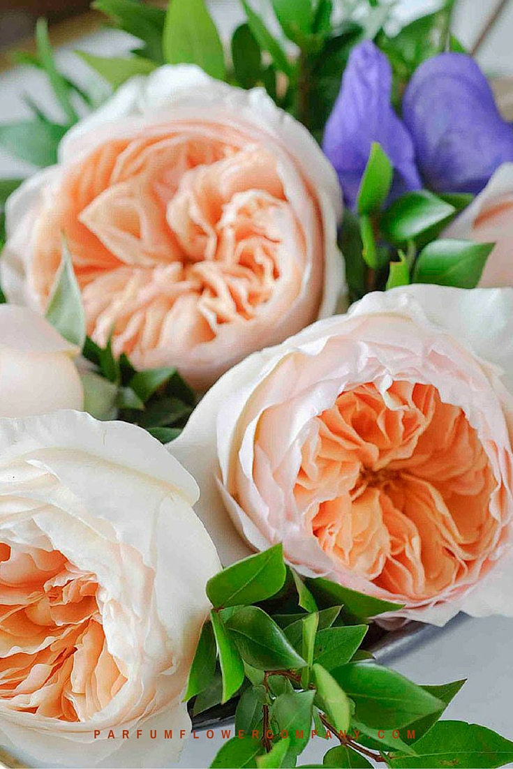 Peach David Austin wedding Rose Juliet 008