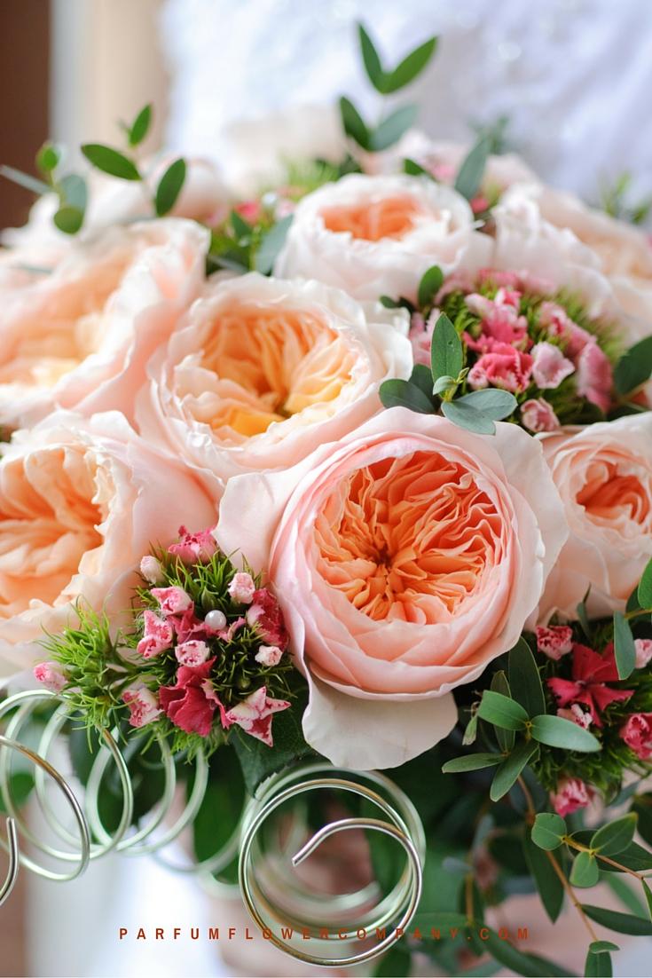 Peach David Austin wedding Rose Juliet 009