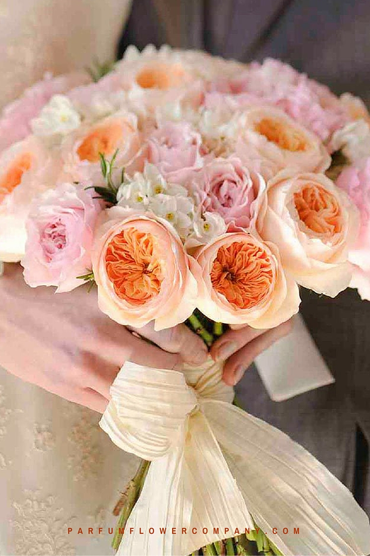 Peach David Austin wedding Rose Juliet 010