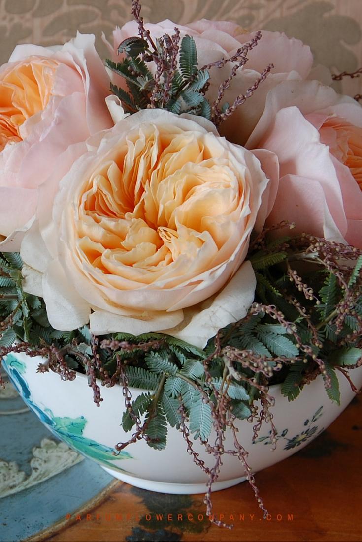 Peach David Austin wedding Rose Juliet 011