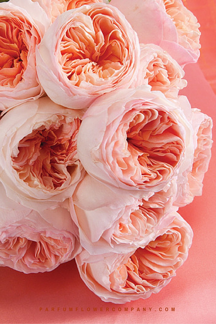 Peach David Austin wedding Rose Juliet 014