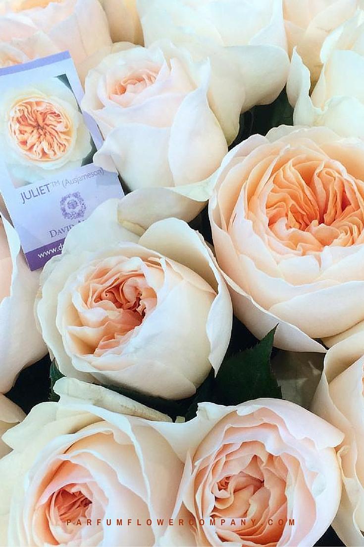 Peach David Austin wedding Rose Juliet 017