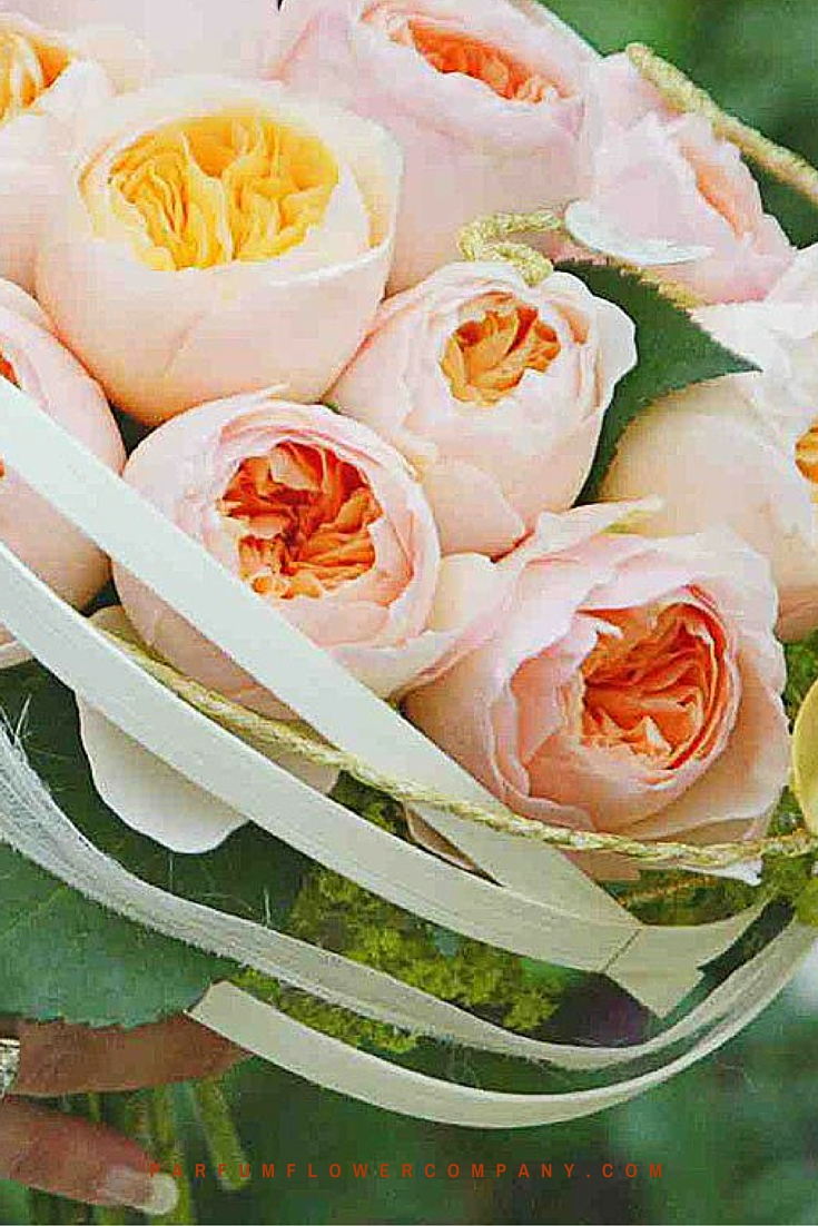 Peach David Austin wedding Rose Juliet 019