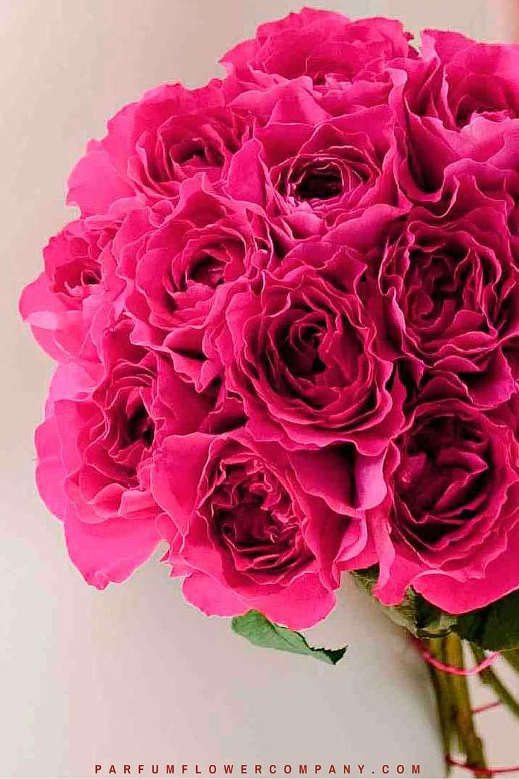 David Austin Wedding rose Kate 008