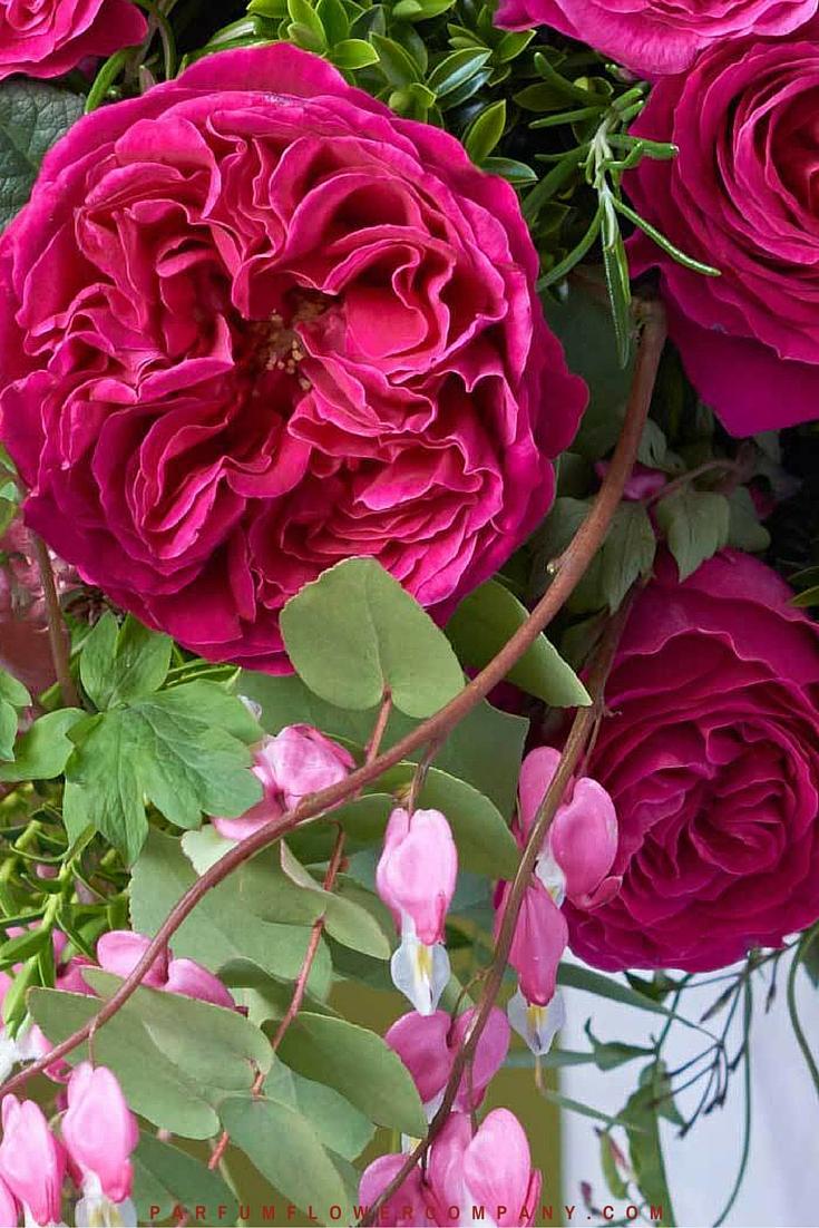 David Austin Wedding rose Kate 013