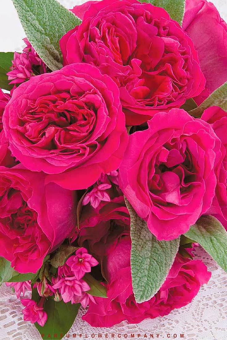 David Austin Wedding rose Kate 014