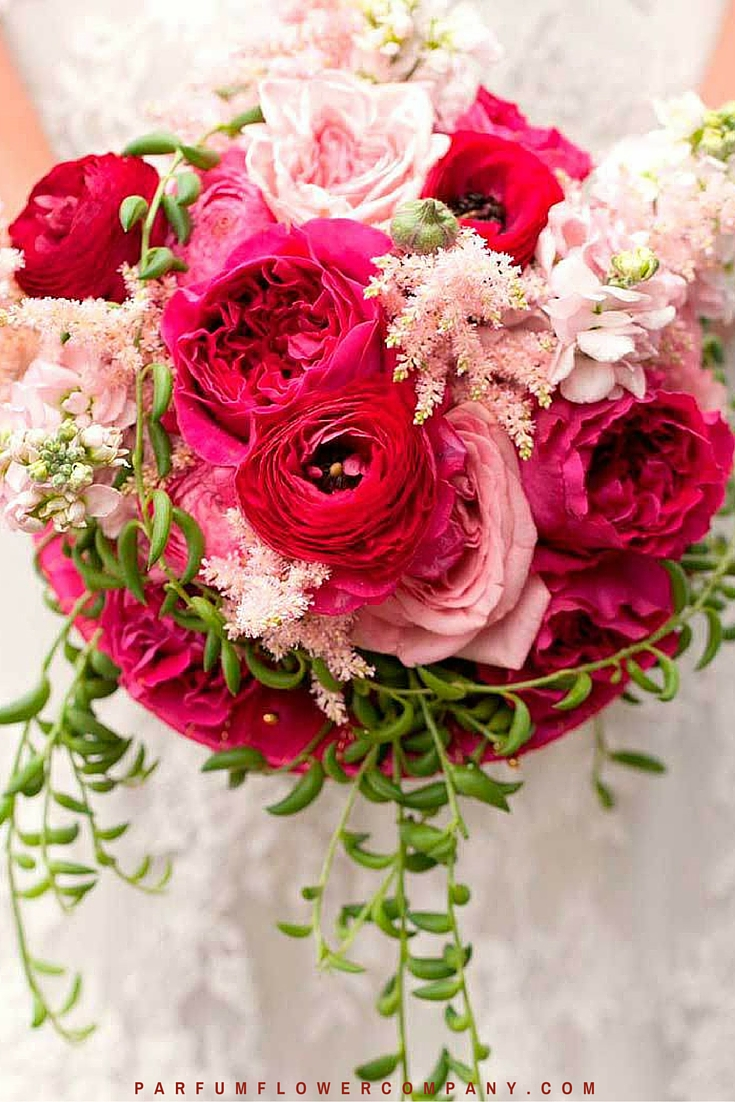 David Austin Wedding rose Kate 016
