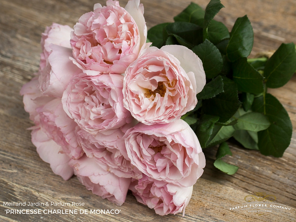 Rosé: Rose Princesse Charlene De Monaco