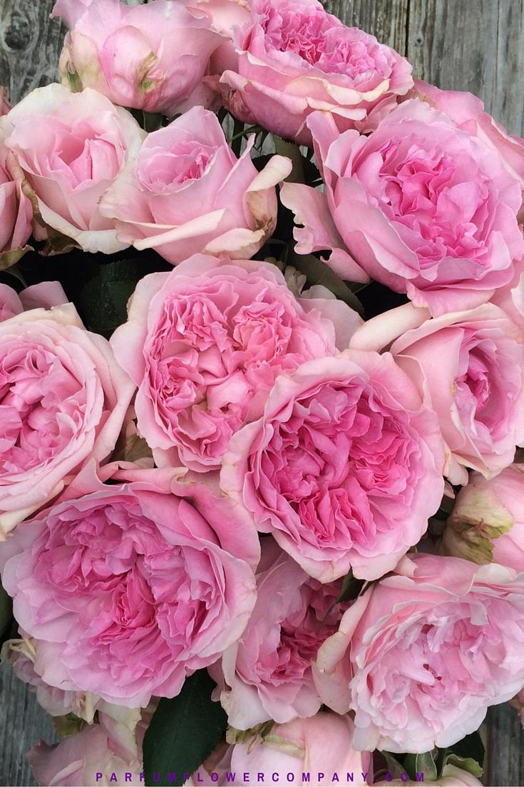 David Austin Wedding Rose Miranda Parfum Flower Company