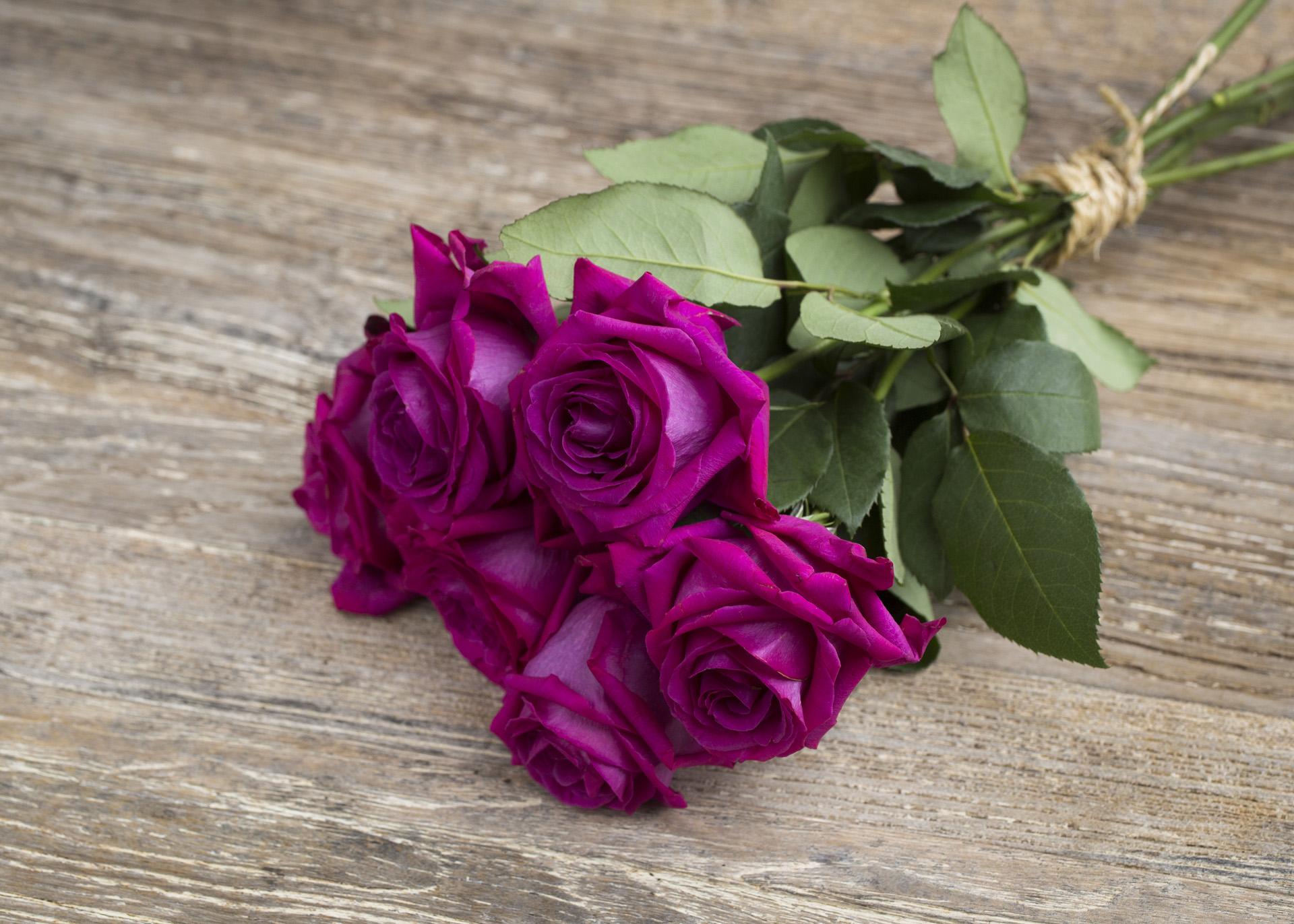 Rose belles rives for Jardin roses