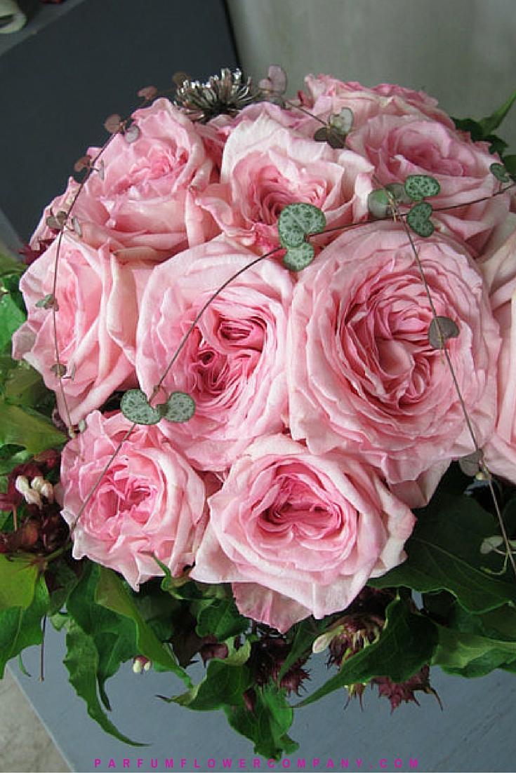 Premium scented garden rose pink o 39 hara - Rose cultivars garden ...