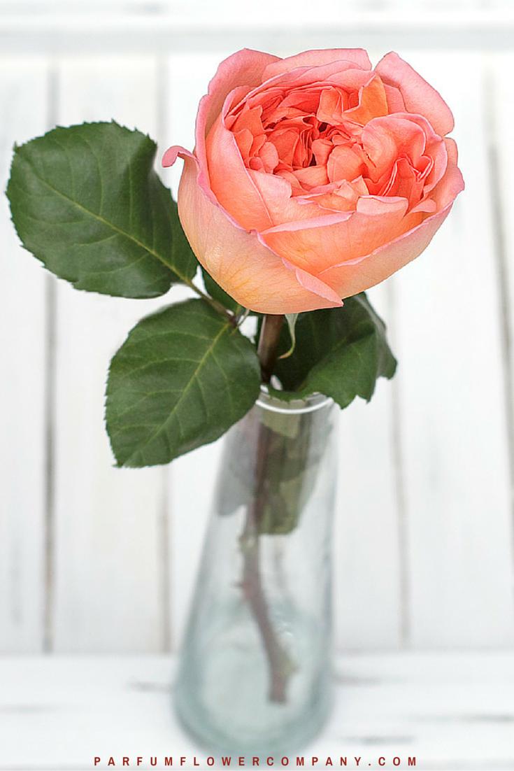 Rene Goscinny - Meilland jardin & Parfum Rose. Premium Scented Orange garden rose - 011