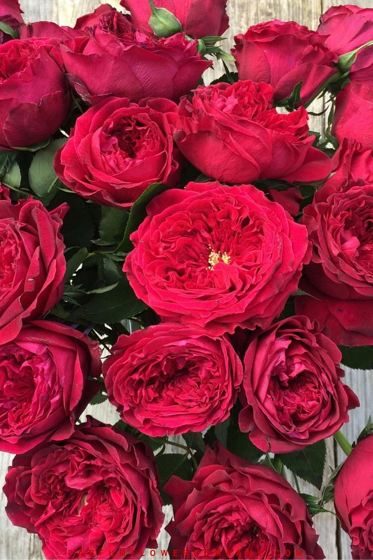 David Austin Wedding Rose Tess 012