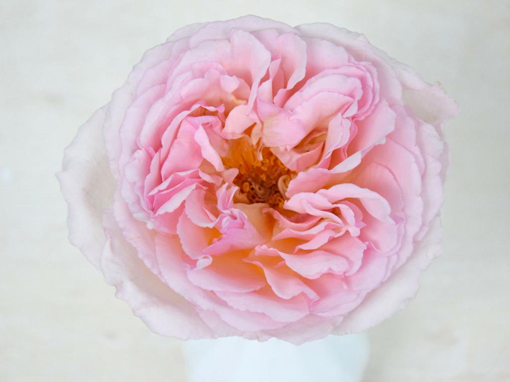Home Parfum Flower Company