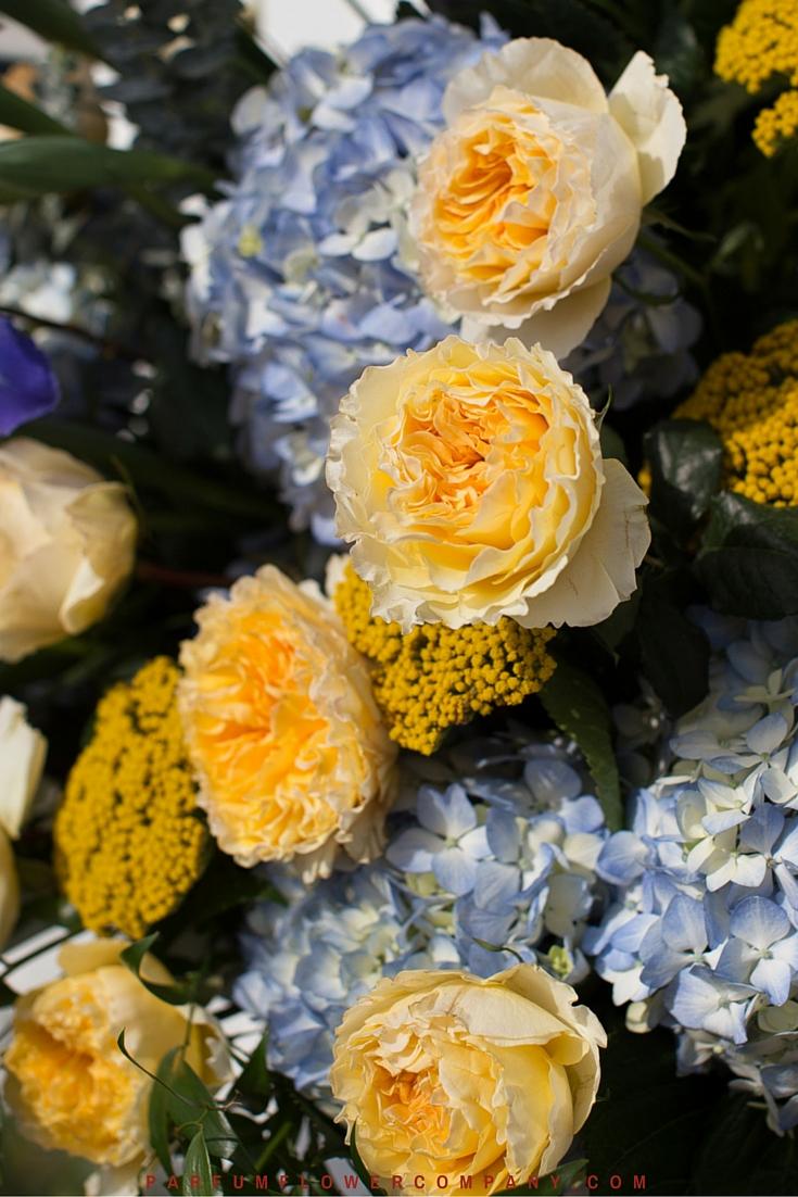 David Austin Wedding Rose Beatrice 018