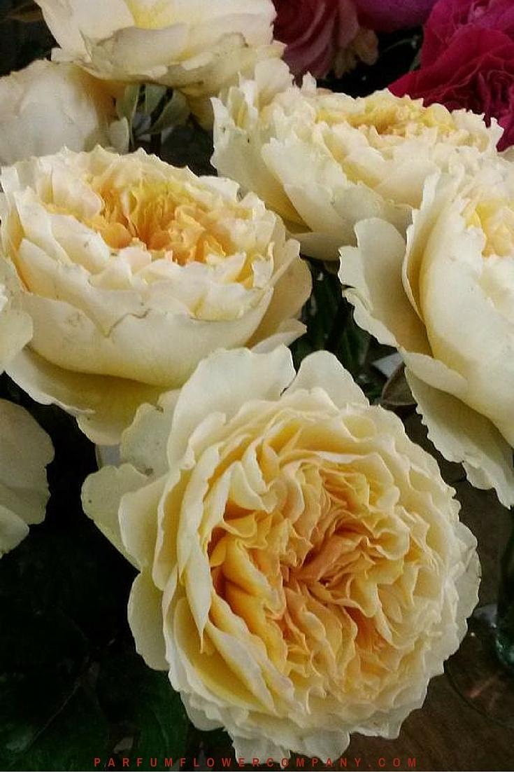 David Austin Wedding Rose Beatrice 020