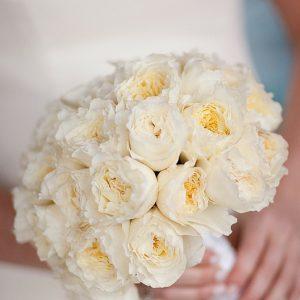 David Austin Wedding Rose Patience 013