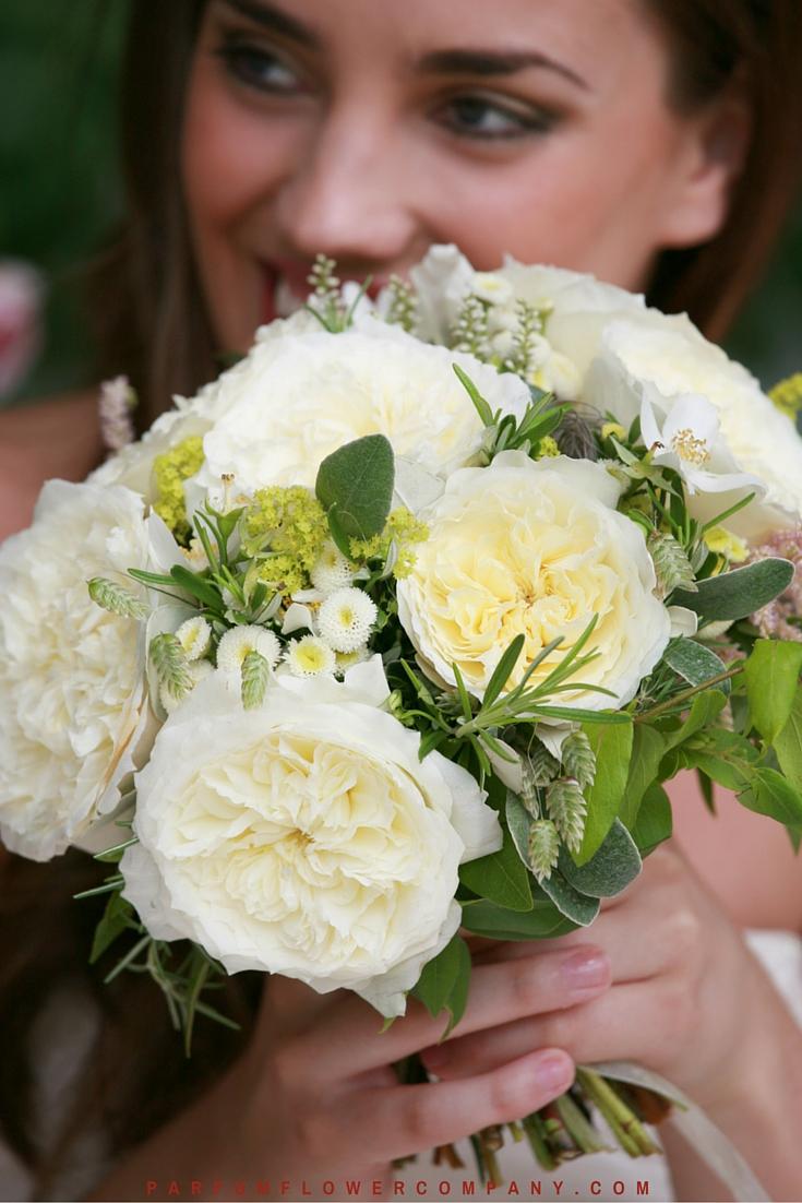 David Austin Wedding Rose Patience