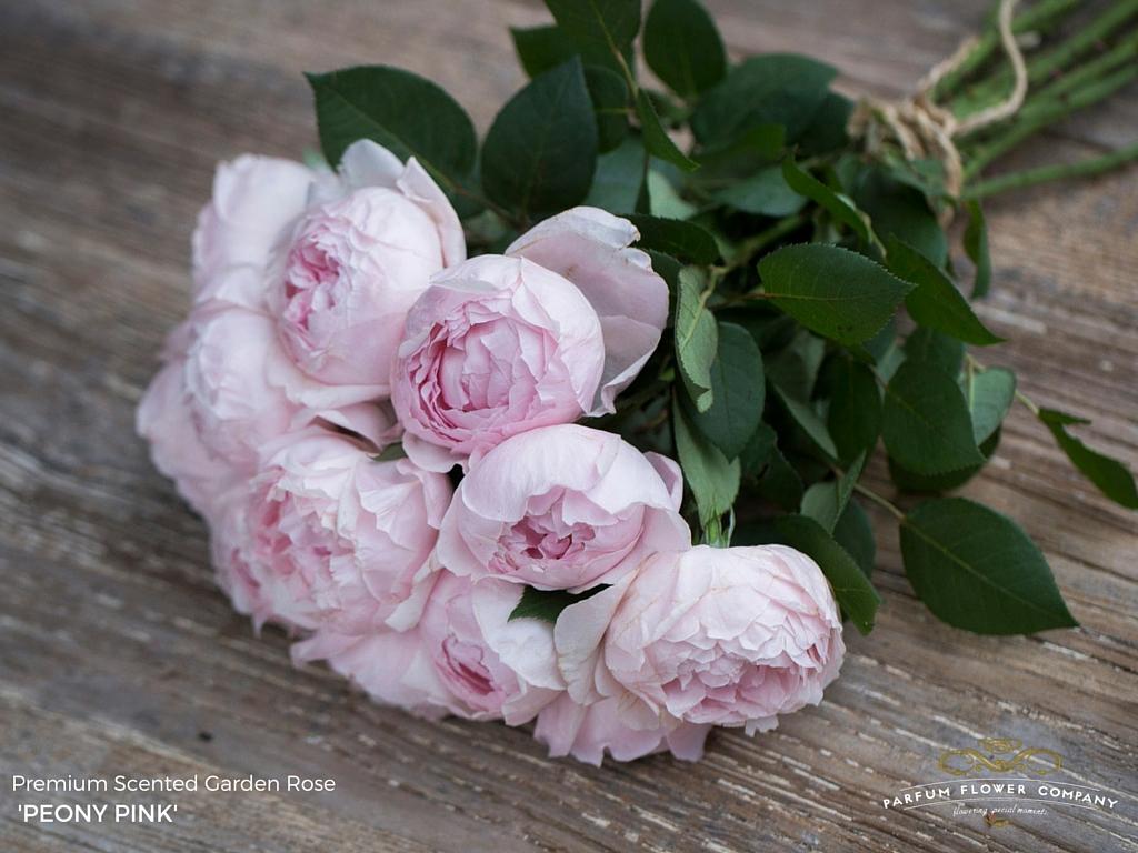 Roses In Garden: Premium Scented Garden Rose Peony Pink