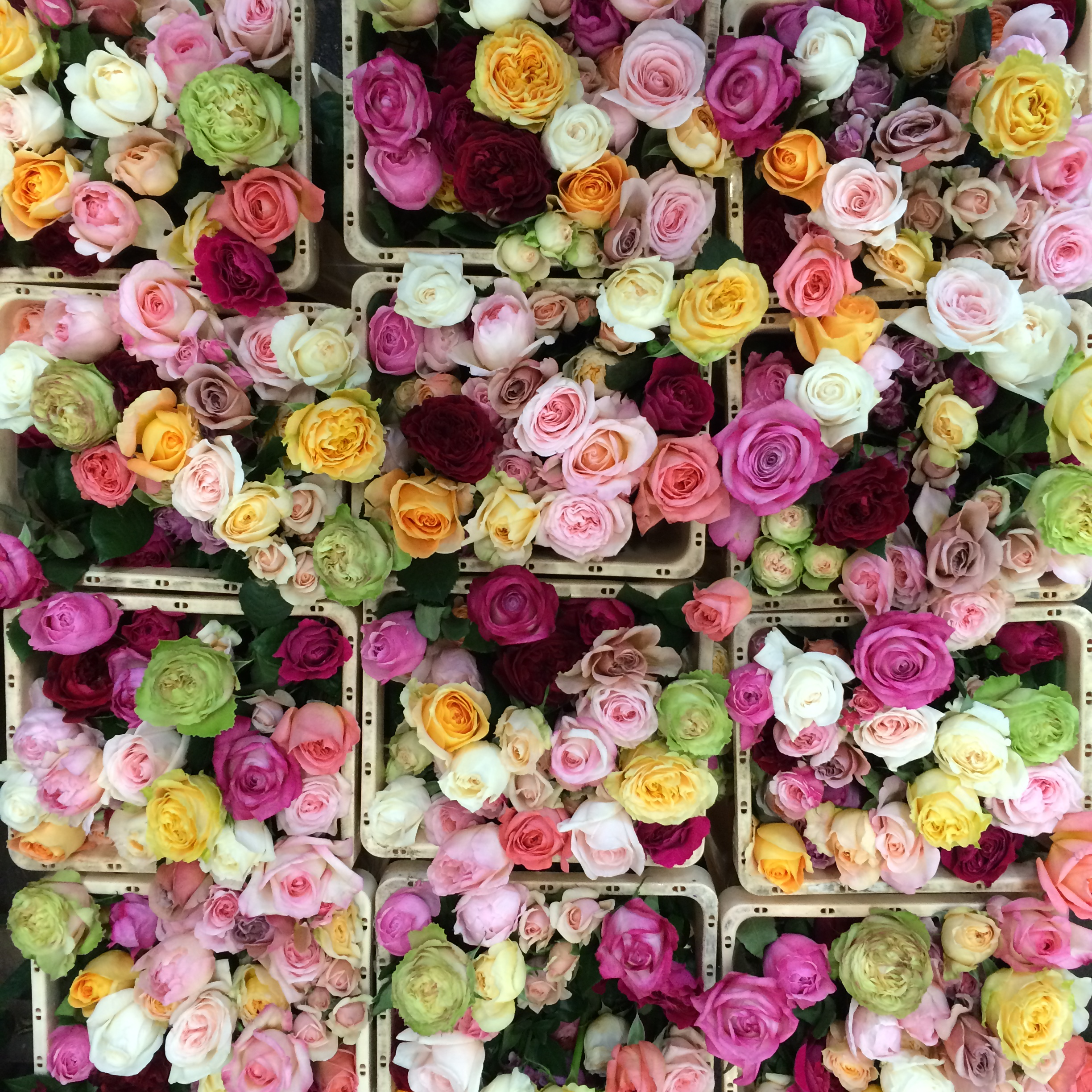 From The Rose Farms In Kenya All The Way To Your Home In Less Than