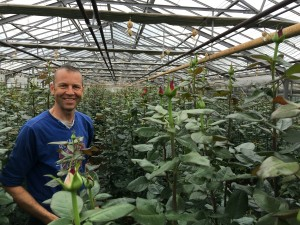 Andre Zekveld in his Greenhouse with the scented roses Extase