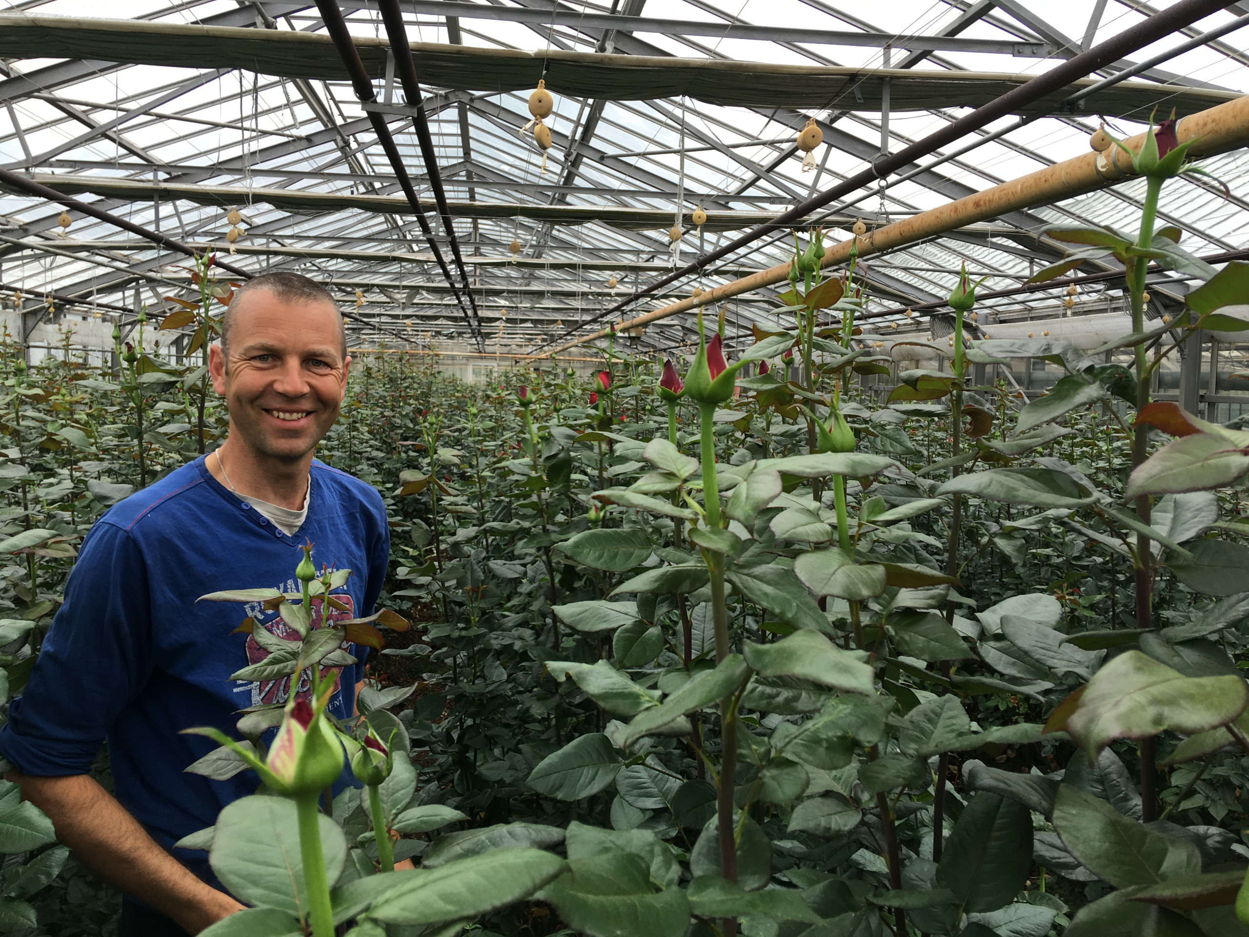 Andre Zekveld in his greenhouse where he grows extase roses