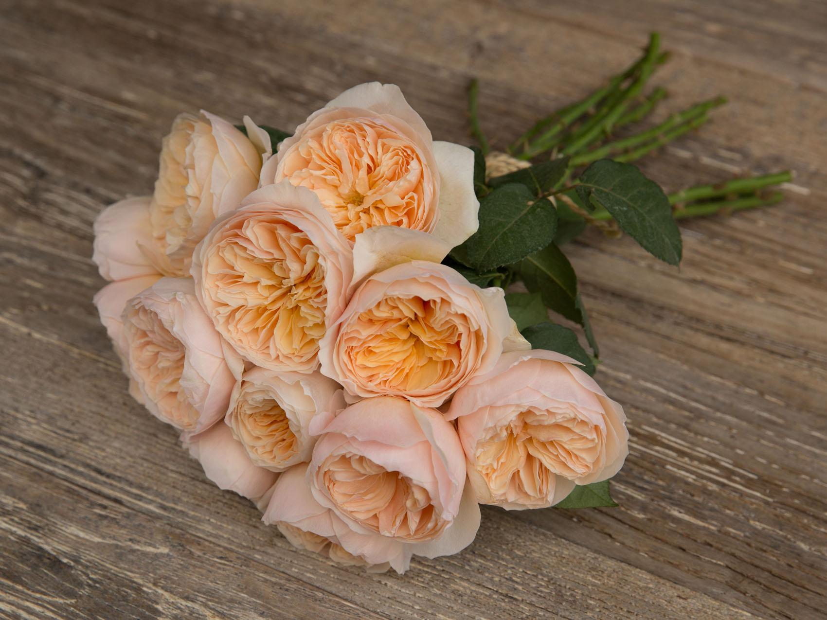 David Austin Wedding Rose ''Juliet''