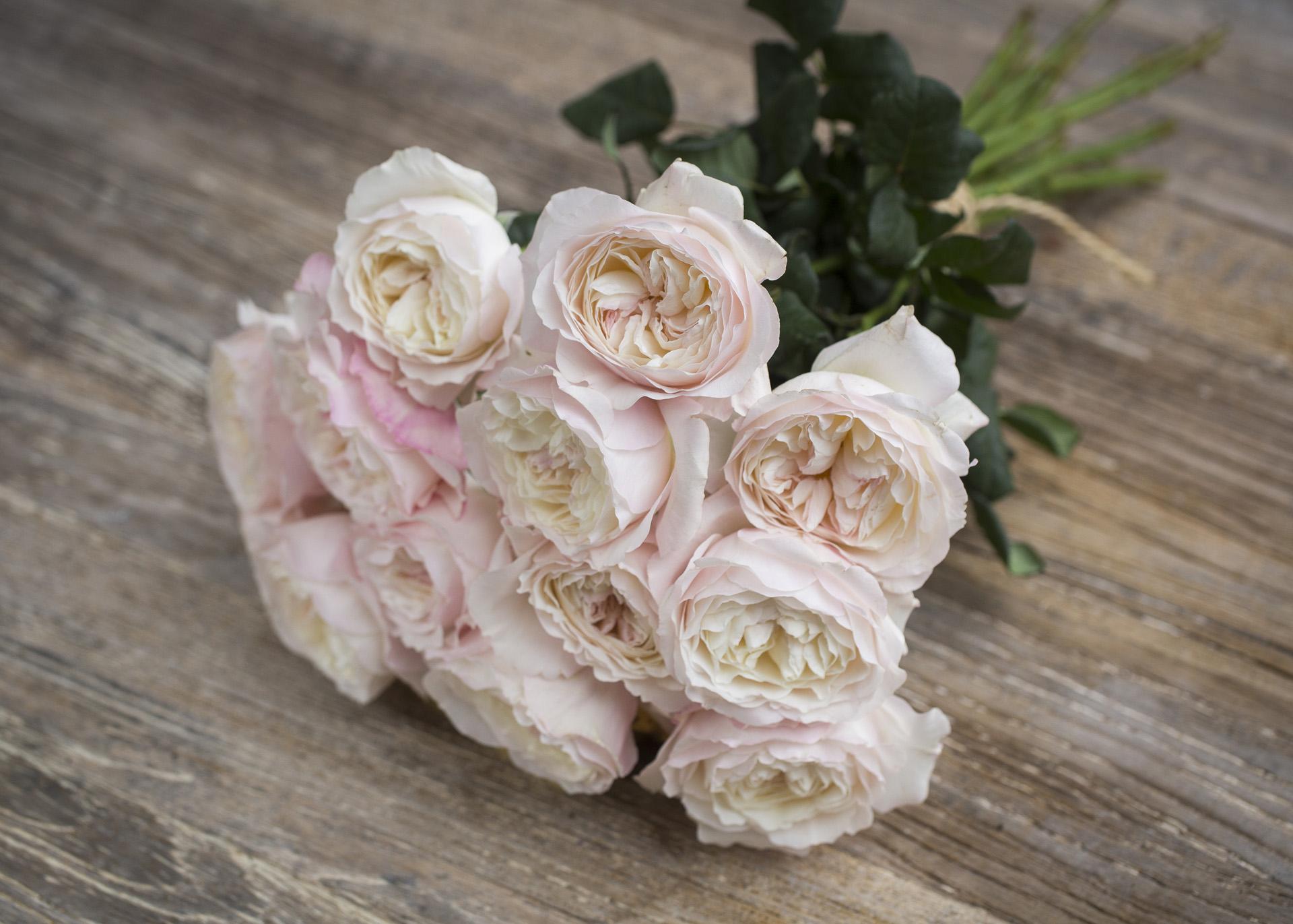 David Austin Wedding Rose ''Keira''