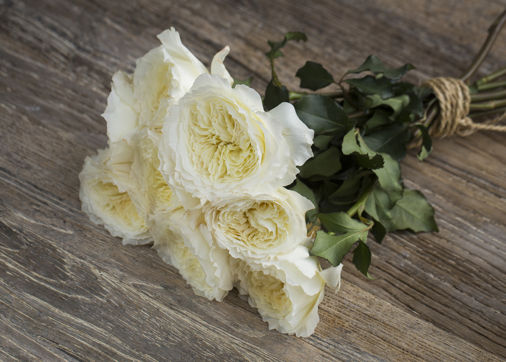 David Austin Wedding Rose ''Patience''