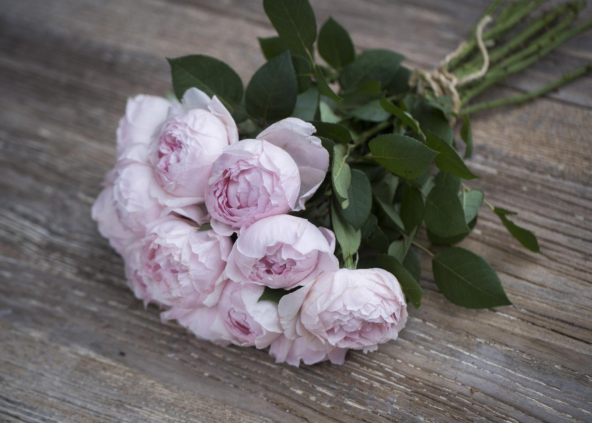 premium scented garden rose peony pink - Garden Rose And Peony
