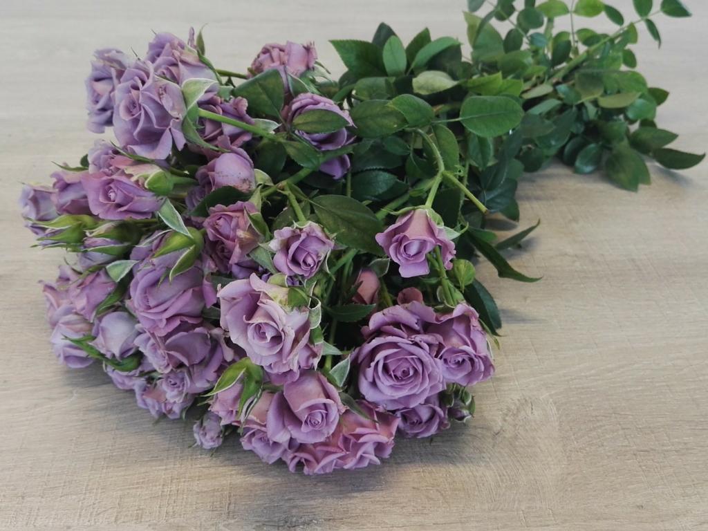 Spray Roses Purple Symphonica
