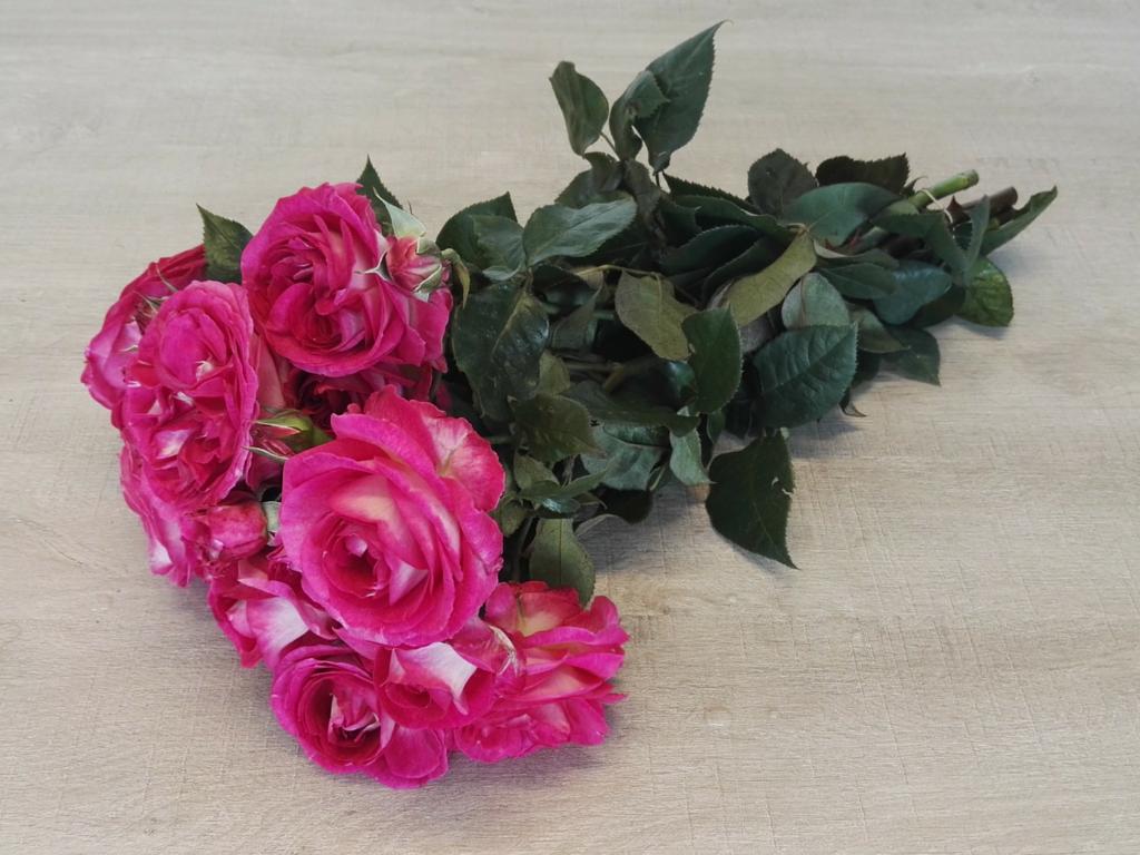 Premium Scented Spray Rose Sweet Donna Summerfield