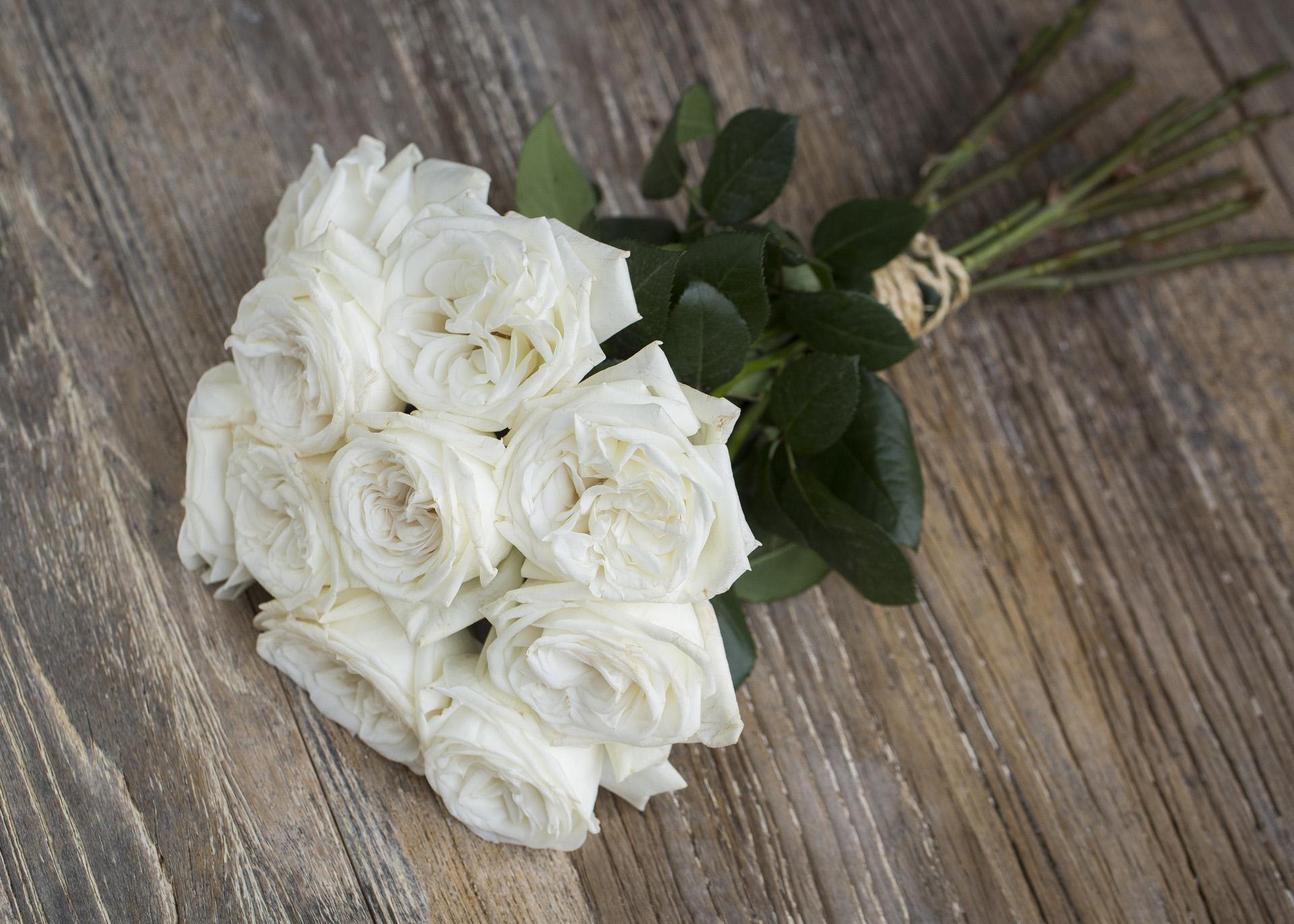 Meilland Jardin & Parfum Rose Jeanne Moreau