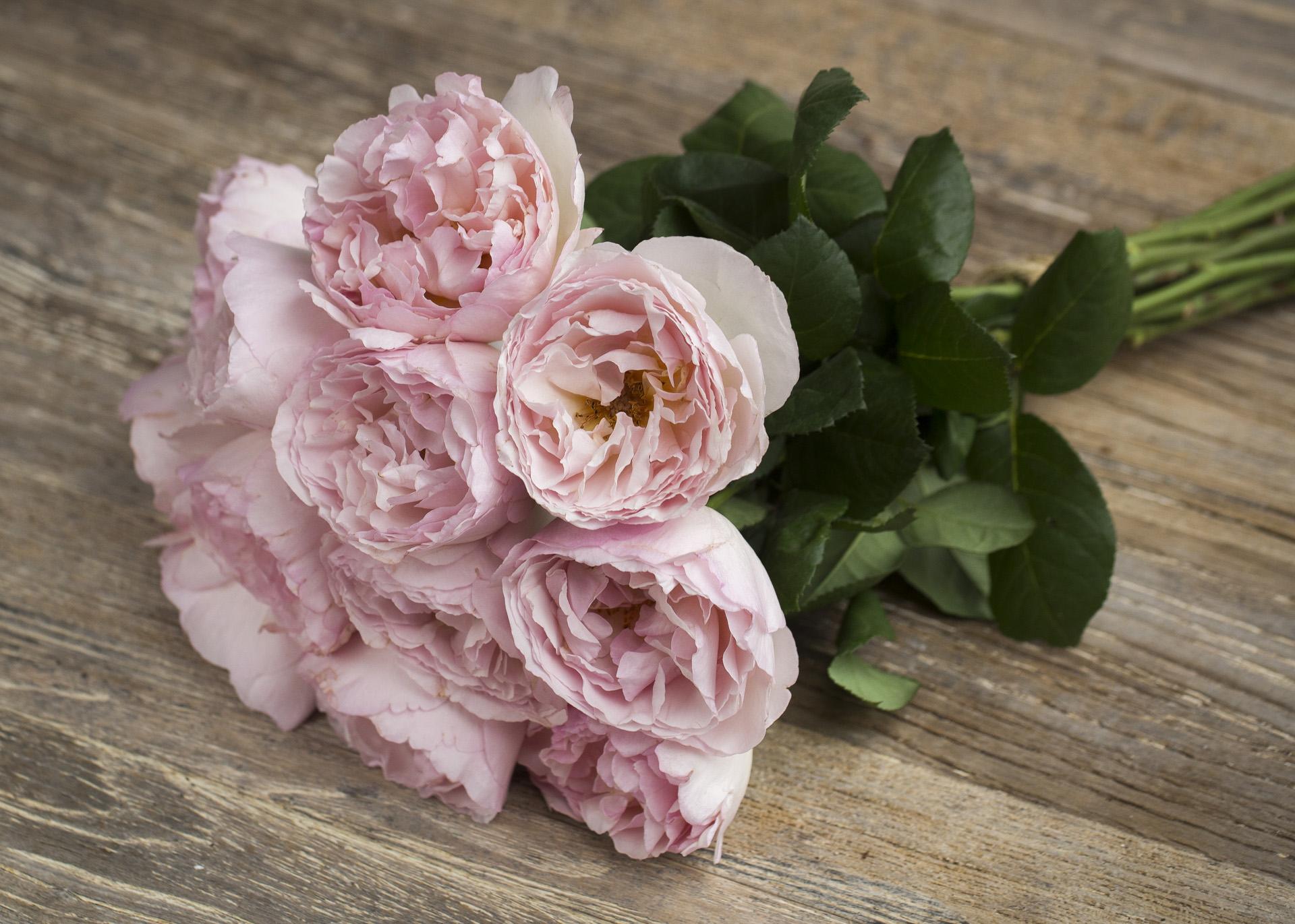 Meilland Jardin & Parfum Rose Princesse Charlene de Monaco