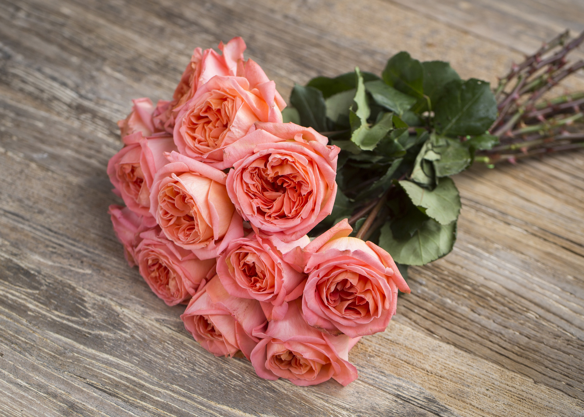 Meilland Jardin & Parfum Rose Rene Goscinny