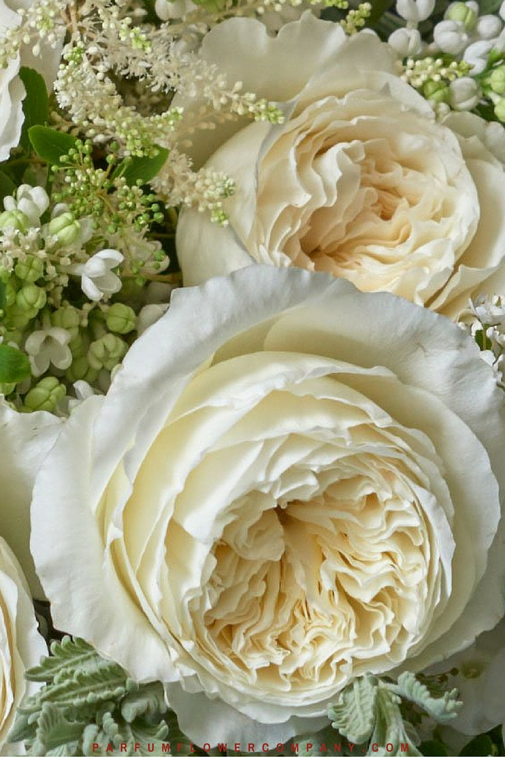 White Garden Rose the 10 best selling scented roses