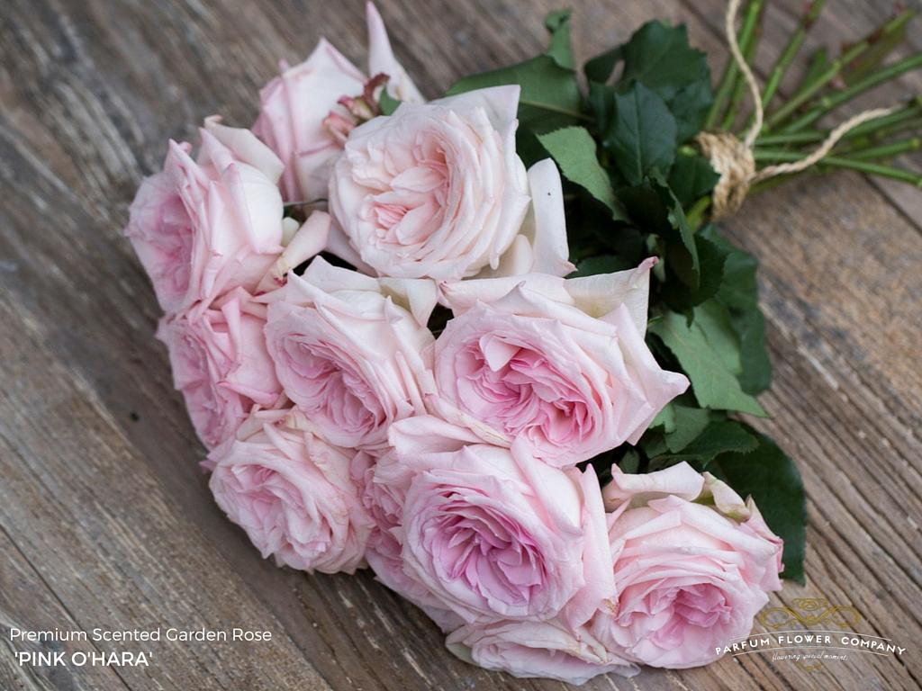 Scented Roses Pink O'Hara