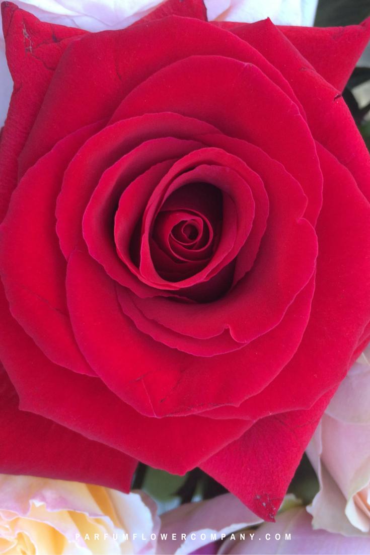 Premium Scented Rose Lady Killer 003 Parfum Flower Company